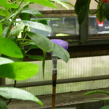 Museum Of Science Butterfly Garden In Boston Ma Picture With