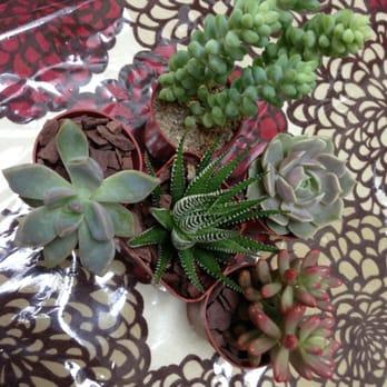 Photo Of Foliage Garden
