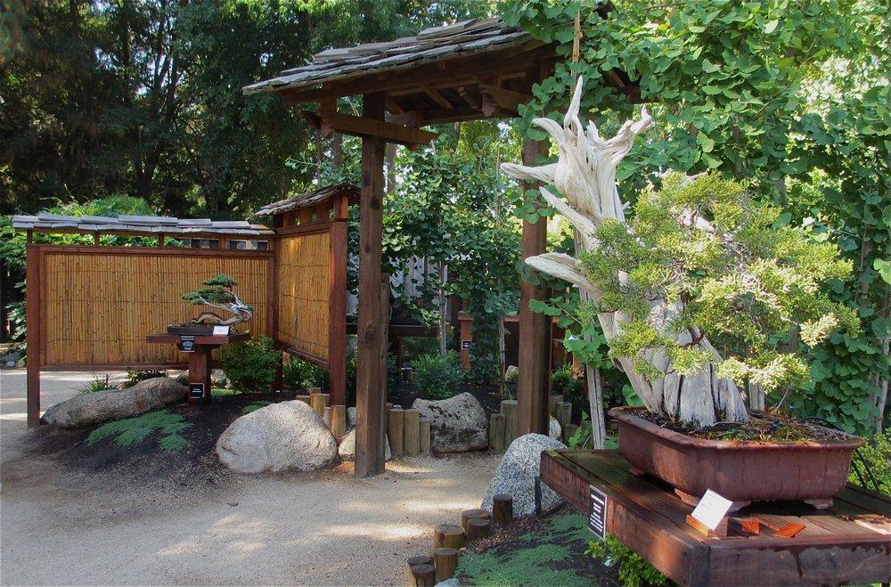 Clark Bonsai Collection Shinzen