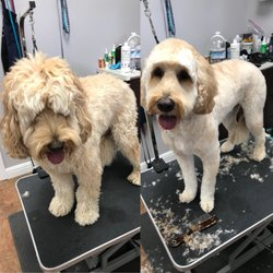 Dog groomers oceanside ca best dog 2017 dippity dog self serve pet wash 48 photos 114 reviews pet sitters in oceanside california solutioingenieria Images
