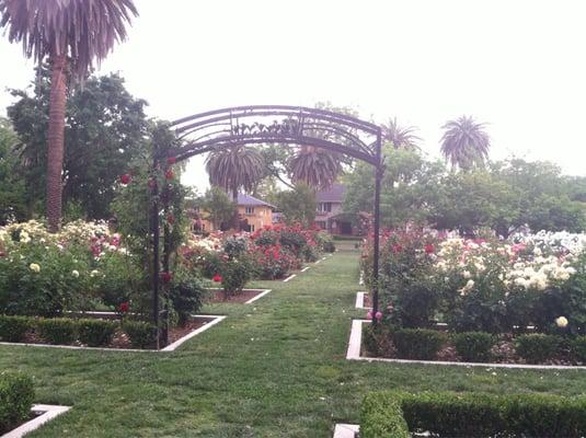 Mckinley Park Rose Garden Parks Sacramento Ca Yelp
