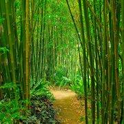 flowers photo of adam ehlmann garden design fort lauderdale fl united states bamboo - Bamboo Garden Design