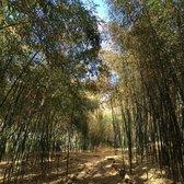 Photo Of Rutgers Gardens   New Brunswick, NJ, United States. Bamboo Garden