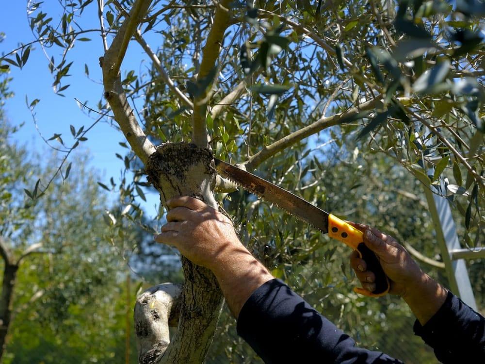 Lester's Tree Service: 16134 Cedar Bay Dr, Bullard, TX