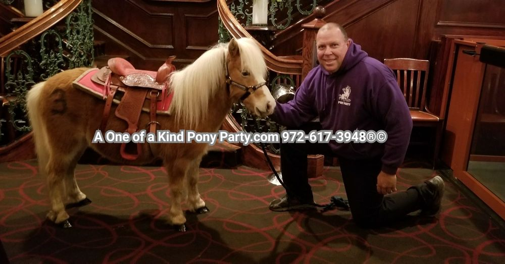 A One of a Kind Pony Party: 912 Bells Chapel Cir, Waxahachie, TX