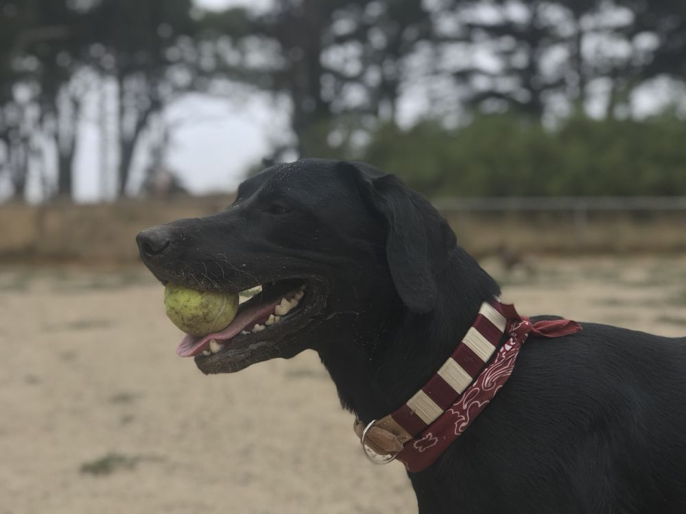 Daffy Doggy: Oakland, CA