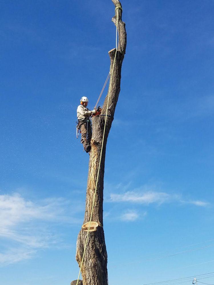 Rugged Cross Tree Service: 7282 Edgebrook Dr, Nampa, ID