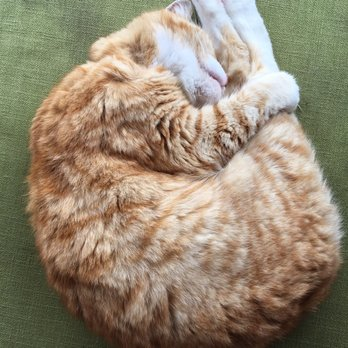 Orange Cat Cafe Hours