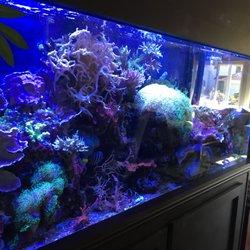 Natural aquarium designs 10 photos aquarium services 227 photo of natural aquarium designs healdsburg ca united states 10 years old voltagebd Images