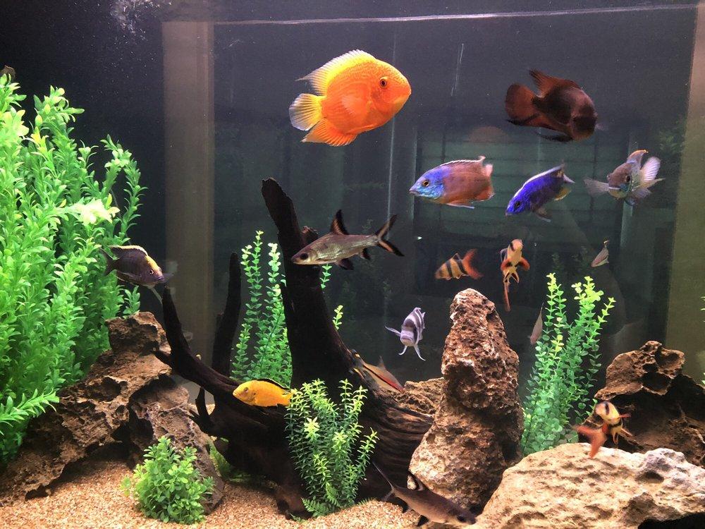 Aquatech Aquarium Service