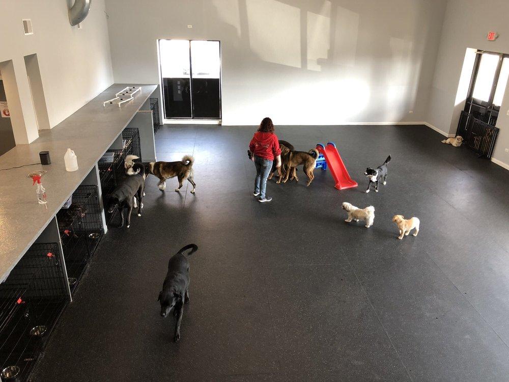 Dog Dayze: 570 W Boughton Rd, Bolingbrook, IL