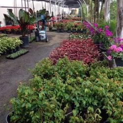 Photo Of Ramirez Nursery   Gardena, CA, United States. Some Of The Shade