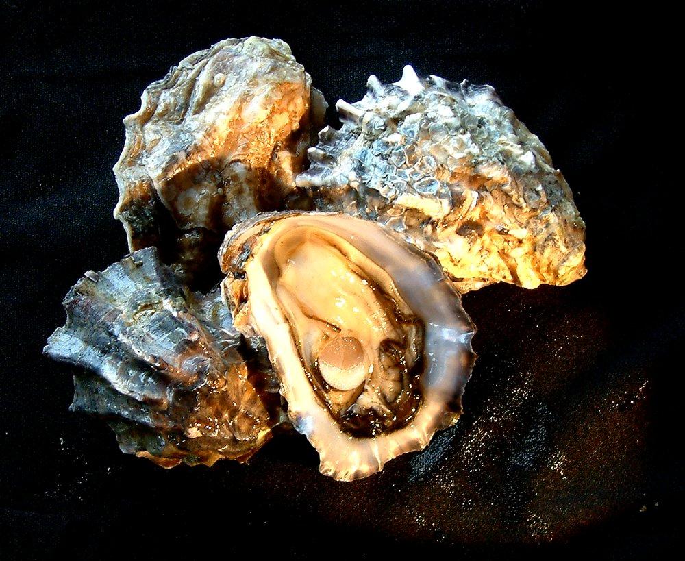 Seasonal Seafoods: 306 Dike Rd, Bay Center, WA