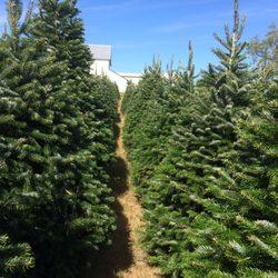Pine Valley Christmas Trees - Christmas Trees - 342 Blake ...
