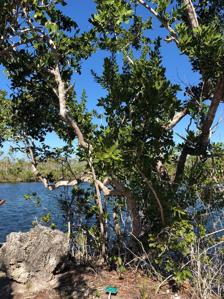 Blue Hole: 179 Key Deer Blvd, Big Pine Key, FL