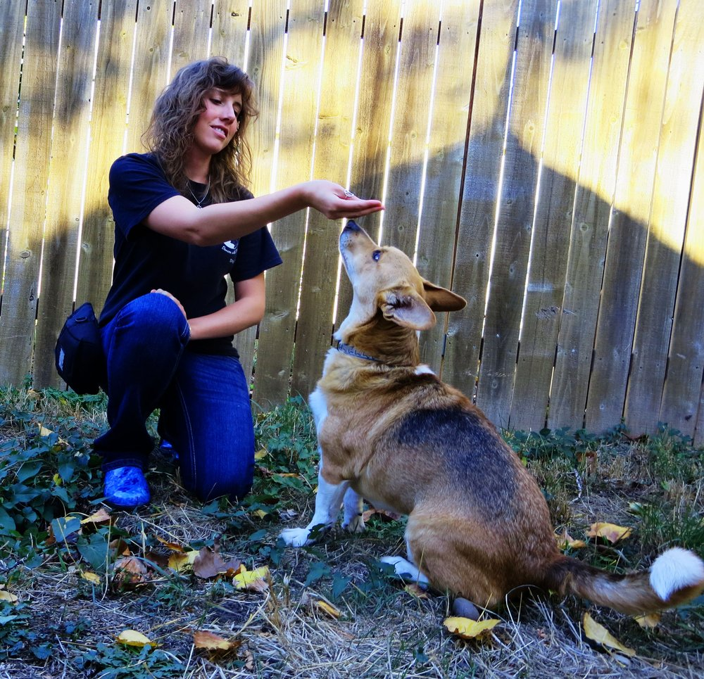 Dances with Dogs: Silver Spring, MD