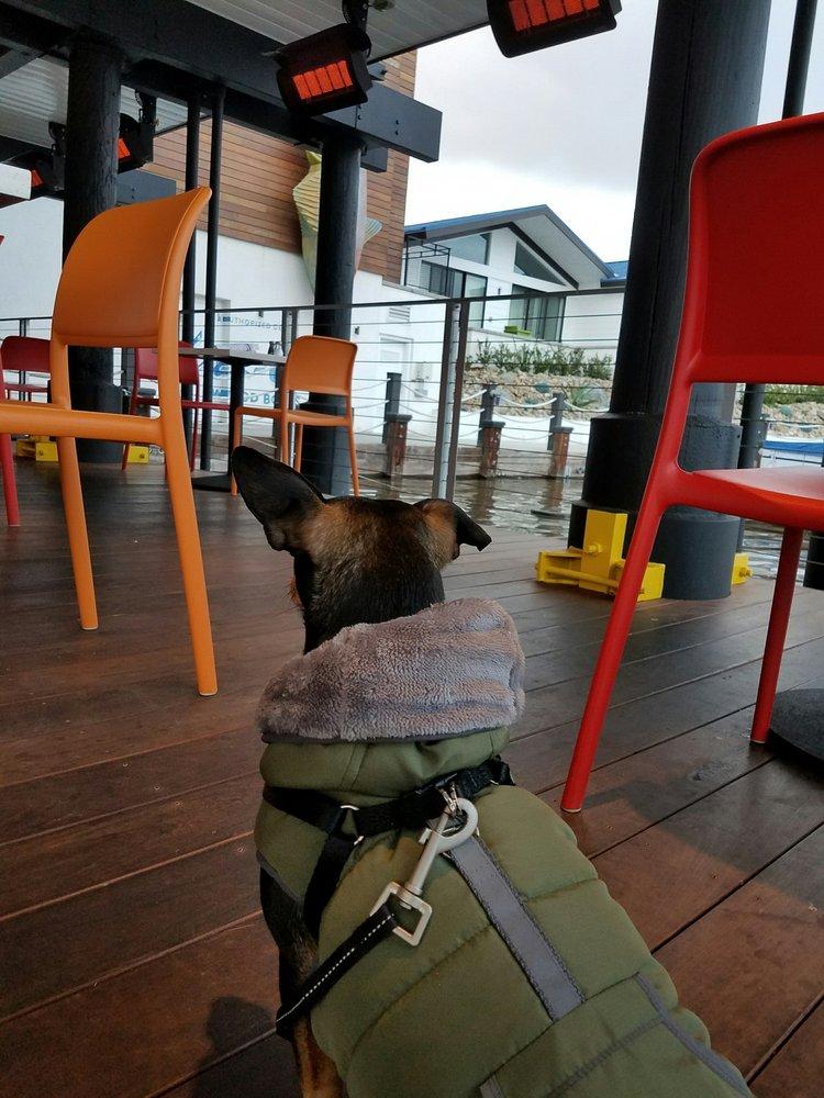 Dog Friendly Restaurants Near San Marcos