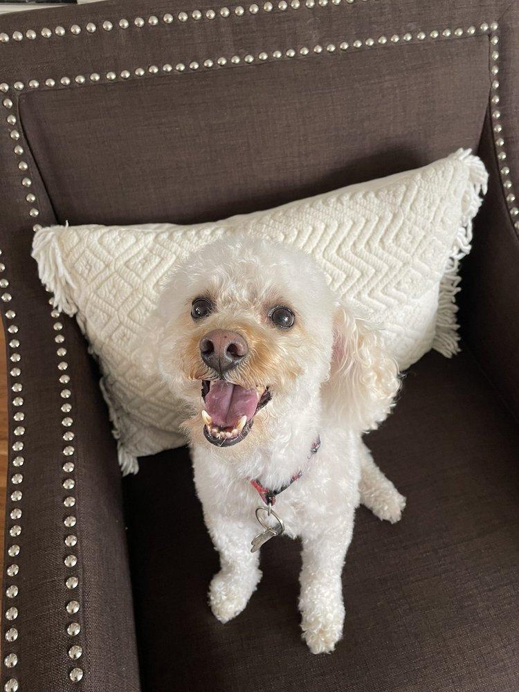 Sweet Dog Of Mine Mobile Grooming: Westbury, NY