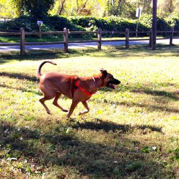 Asheville Nc Azalea Dog Park