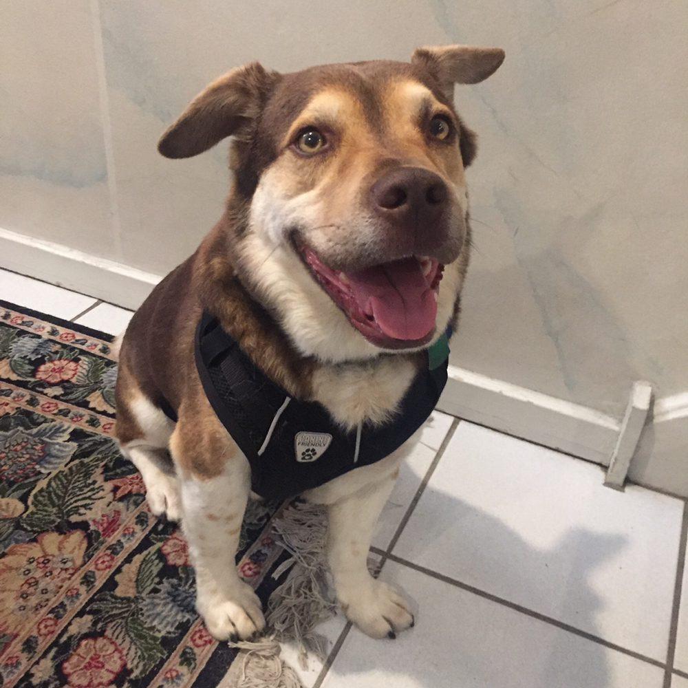 Philadelphia Pet Care Company
