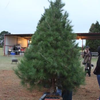 Elgin Christmas Tree Farm.Elgin Christmas Tree Farm Temp Cerrado 53 Fotos Y 41