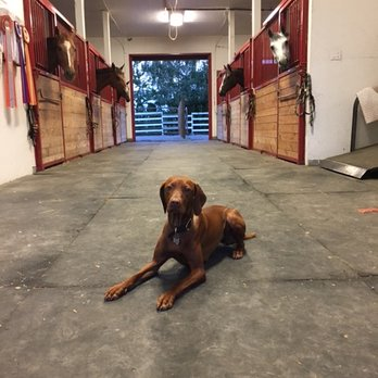 Zen Dog Training Vancouver