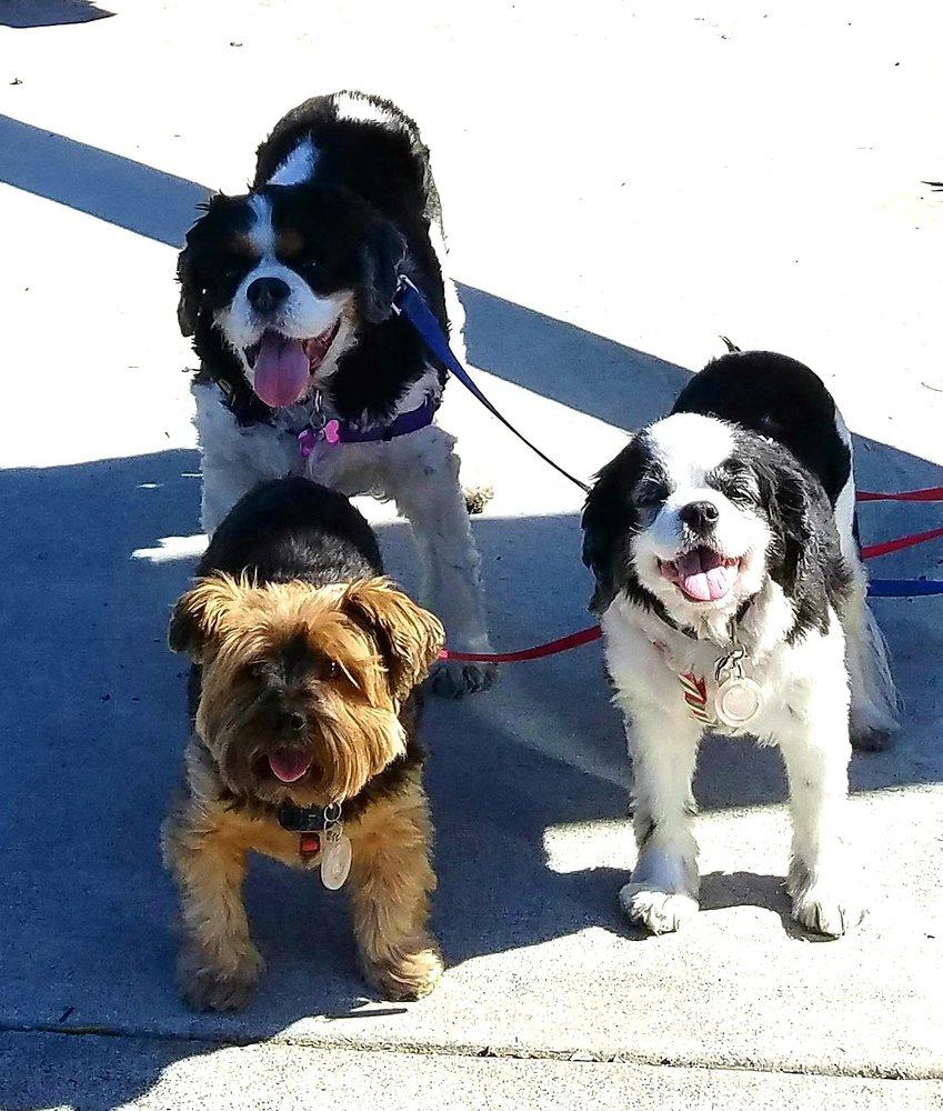 Beth's Pet Service: Kenwood, CA