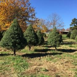 Photo Of Back Achers Christmas Tree Farm Raleigh Nc United States Trees