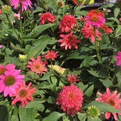 Walmart Garden Center   Nurseries U0026 Gardening   3706 Diann Marie Rd,  Louisville, KY   Phone Number   Yelp