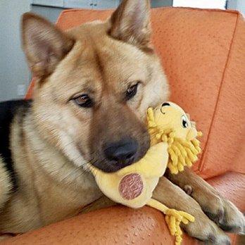 Westside German Shepherd Rescue 184 Photos 291 Reviews Animal