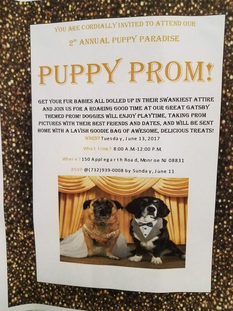 Puppy Paradise: 150 Applegarth Rd, Monroe, NJ