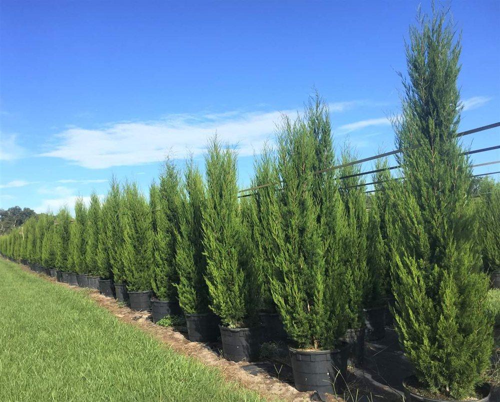 DC Lawn Services: 8620 Milo Ln, Port Richey, FL