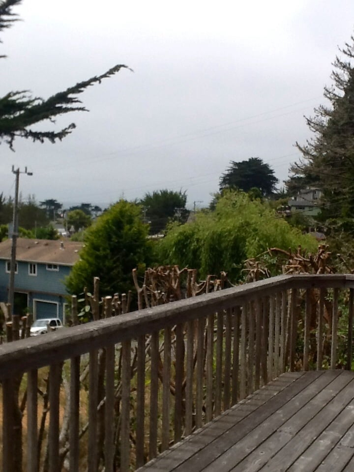 All Areas Tree Experts: 357 6th St, Montara, CA
