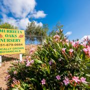 Photo Of Murrieta Oaks Nursery Ca United States