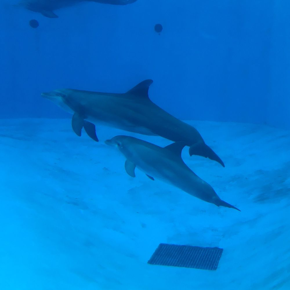 Yoga Among The Dolphins