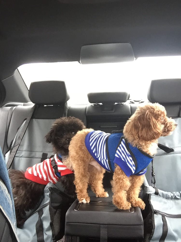 Petcare Animal Clinic: 4373 156th St, Flushing, NY