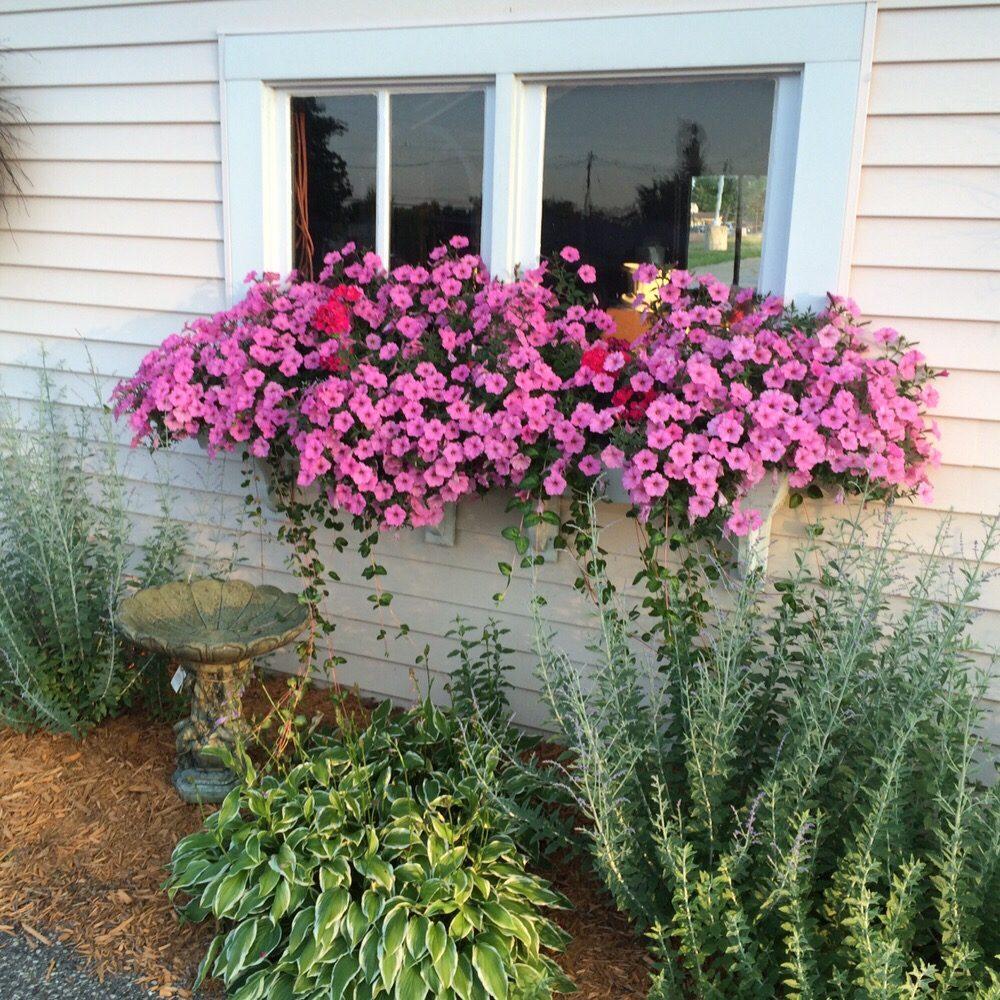 Lola's Flower Garden: 422 E Main St, Carson City, MI