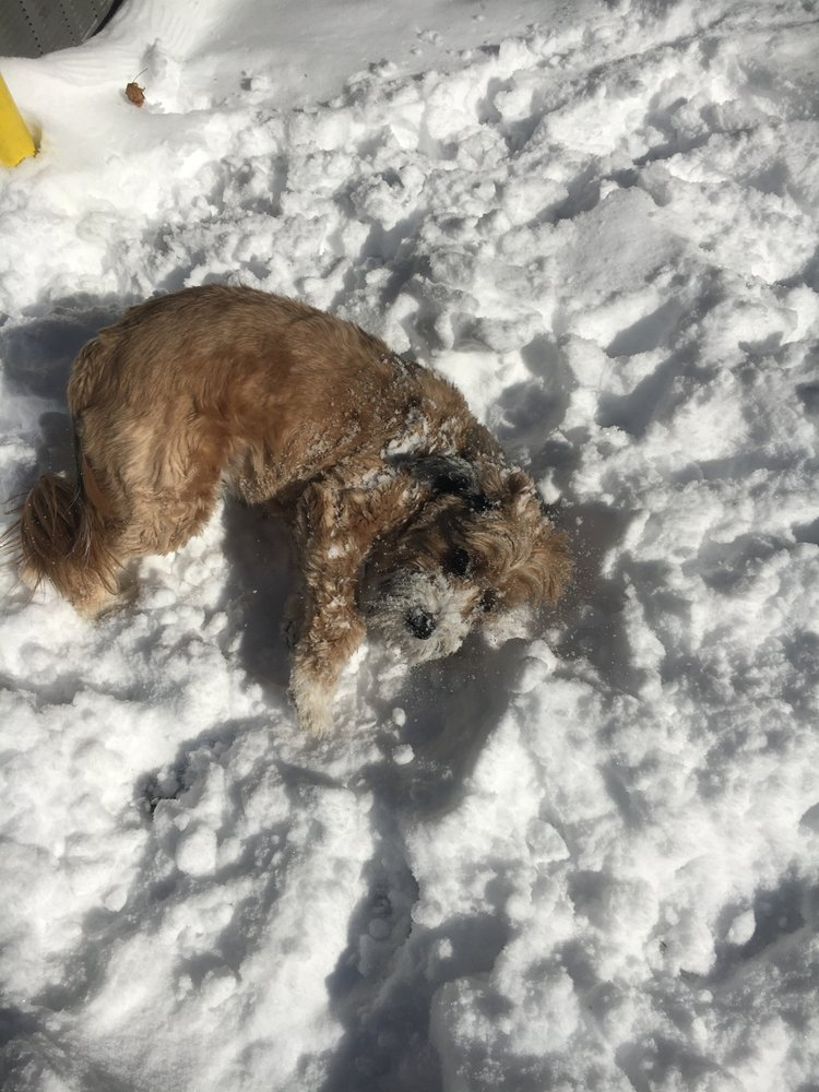 Buddy's Barking Lot: 12 W Main St, Elmsford, NY