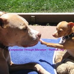 Top 10 Best Dog Adoption In San Jose Ca Last Updated April 2019