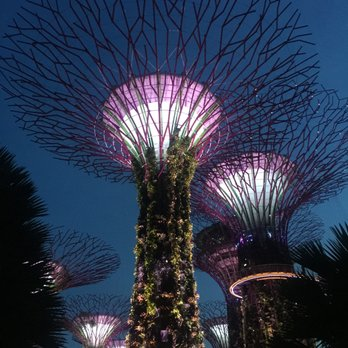 photo of gardens by the bay singapore singapore super tree grove - Garden By The Bay At Night