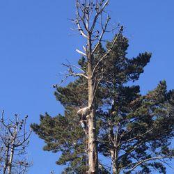 Brush Hog Tree Care - Tree Services - Half Moon Bay, CA - Phone