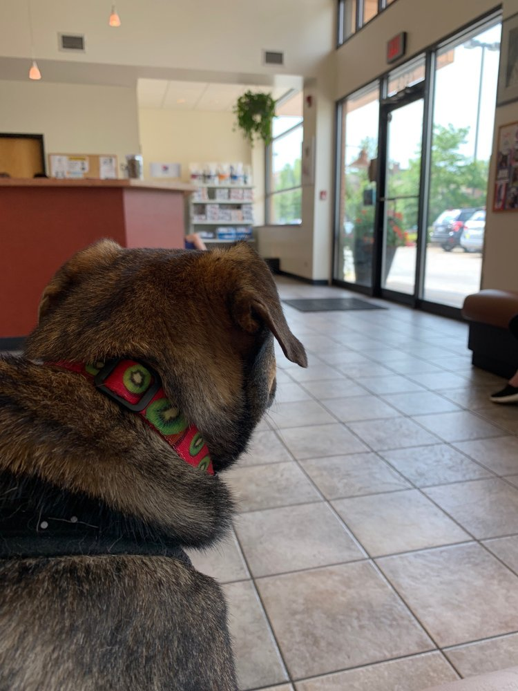River Forest Animal Hospital: 7515 Lake St, River Forest, IL