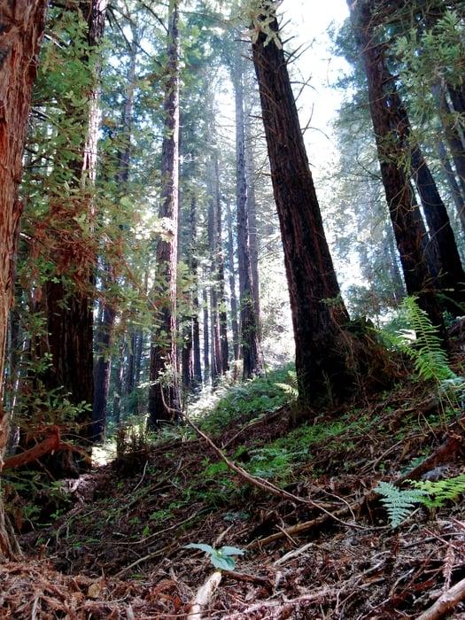 Photos For Redwood Regional Park Yelp
