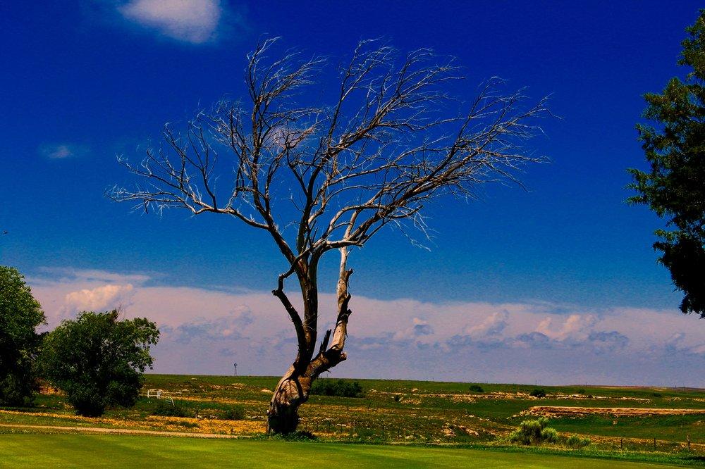 Twisted Elm Golf Club: 2979 Hwy 54 W, Dalhart, TX
