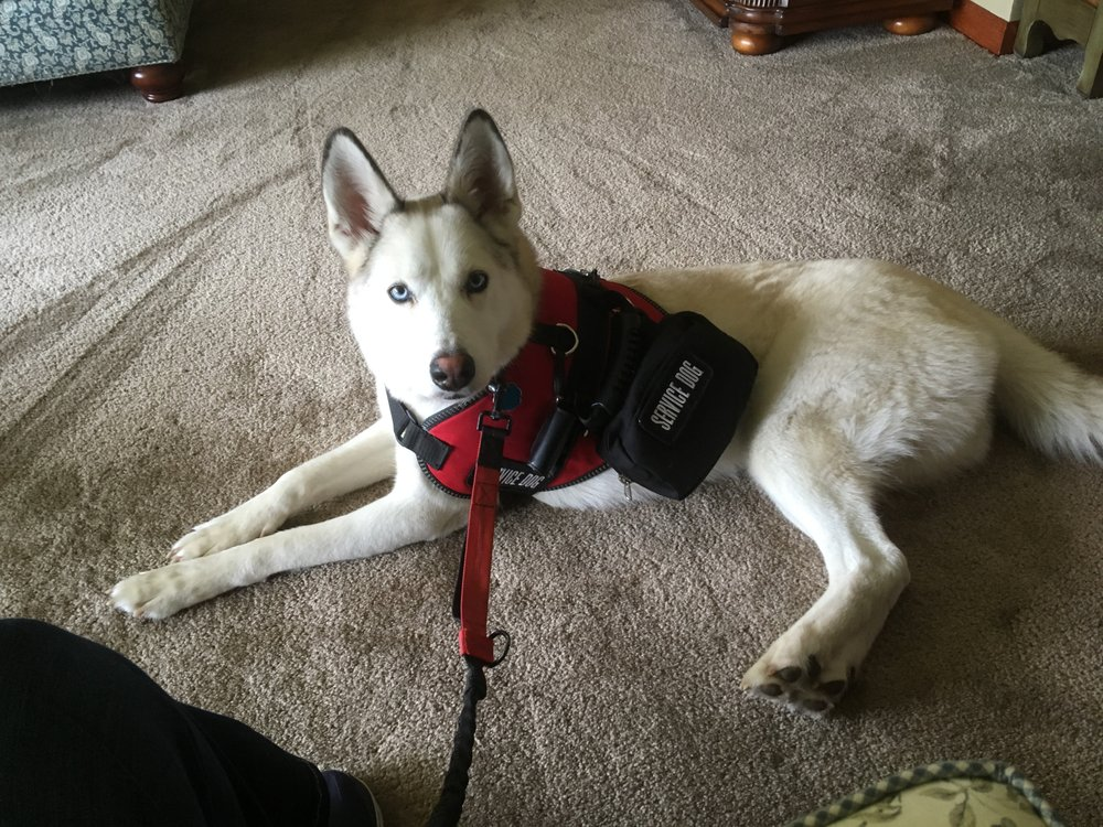 Service Dog Questions: Harrisville, RI