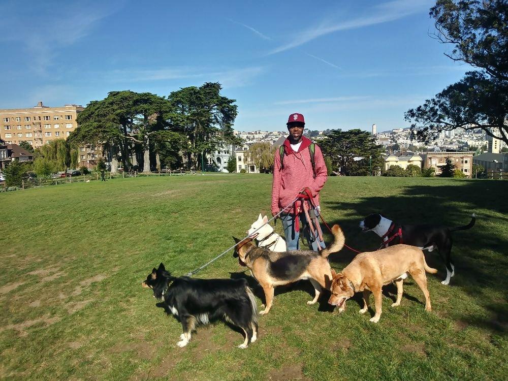 Terry and Roxy's Dog Walks: 909 Grove St, San Francisco, CA