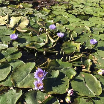 Photo Of The Japanese Garden   Van Nuys, CA, United States