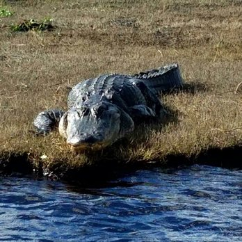 Airboat Rides at Midway - 159 Photos & 71 Reviews - Boat Charters ...