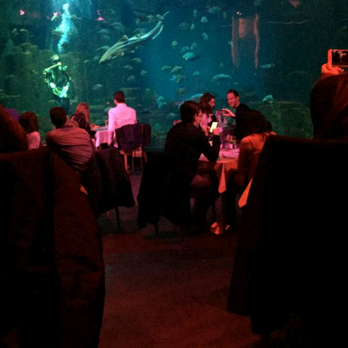 l aquarium 77 photos 72 avis aquarium 5 avenue albert de mun trocad 233 ro i 233 na