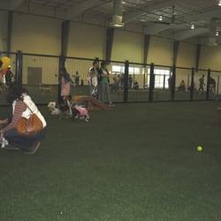 Unleashed Indoor Dog Park